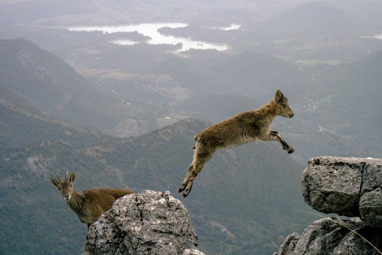 jumping into action
