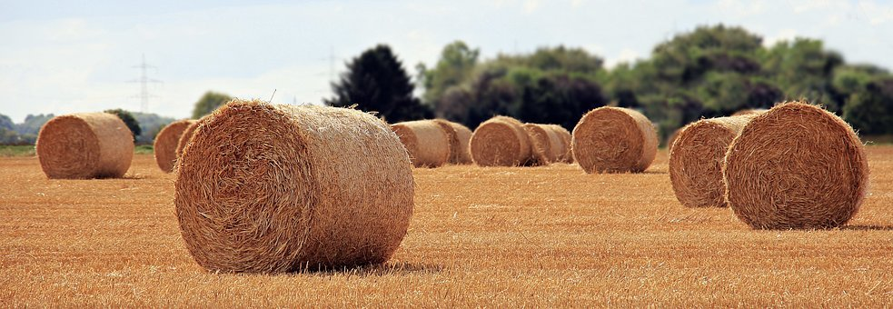harvest bails